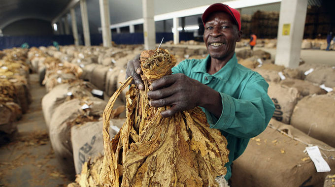Zimbabwe tobacco sales drop 44%